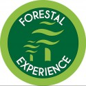 Forest Experience